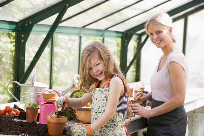 Несколько советов по выращиванию рассады в домашних условиях