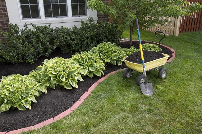 Посадить сад своими руками 726