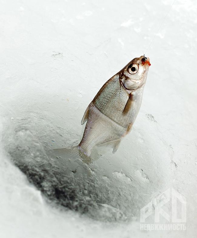 подледная рыбалка в московской